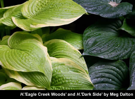 H.'Eagle Creek Woods and H.'Dark Side'